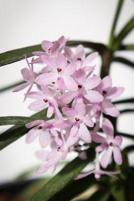 Detailaufnahme der Blüten