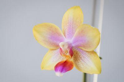Erste Blüte ohne Defekte
