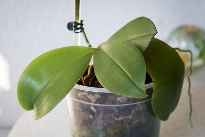 Neue, gesunde Blätter