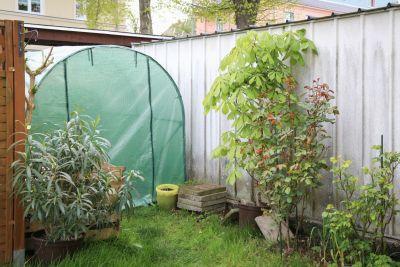 Oleander und Roßkastanie