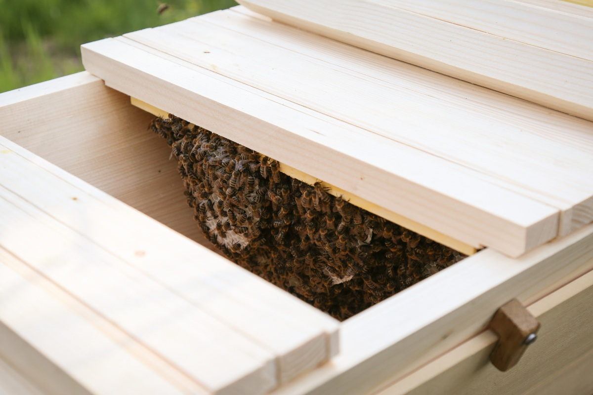 Top-Bar-Hive Bienenbeute kurz vorgestellt » Majas Pflanzenblog