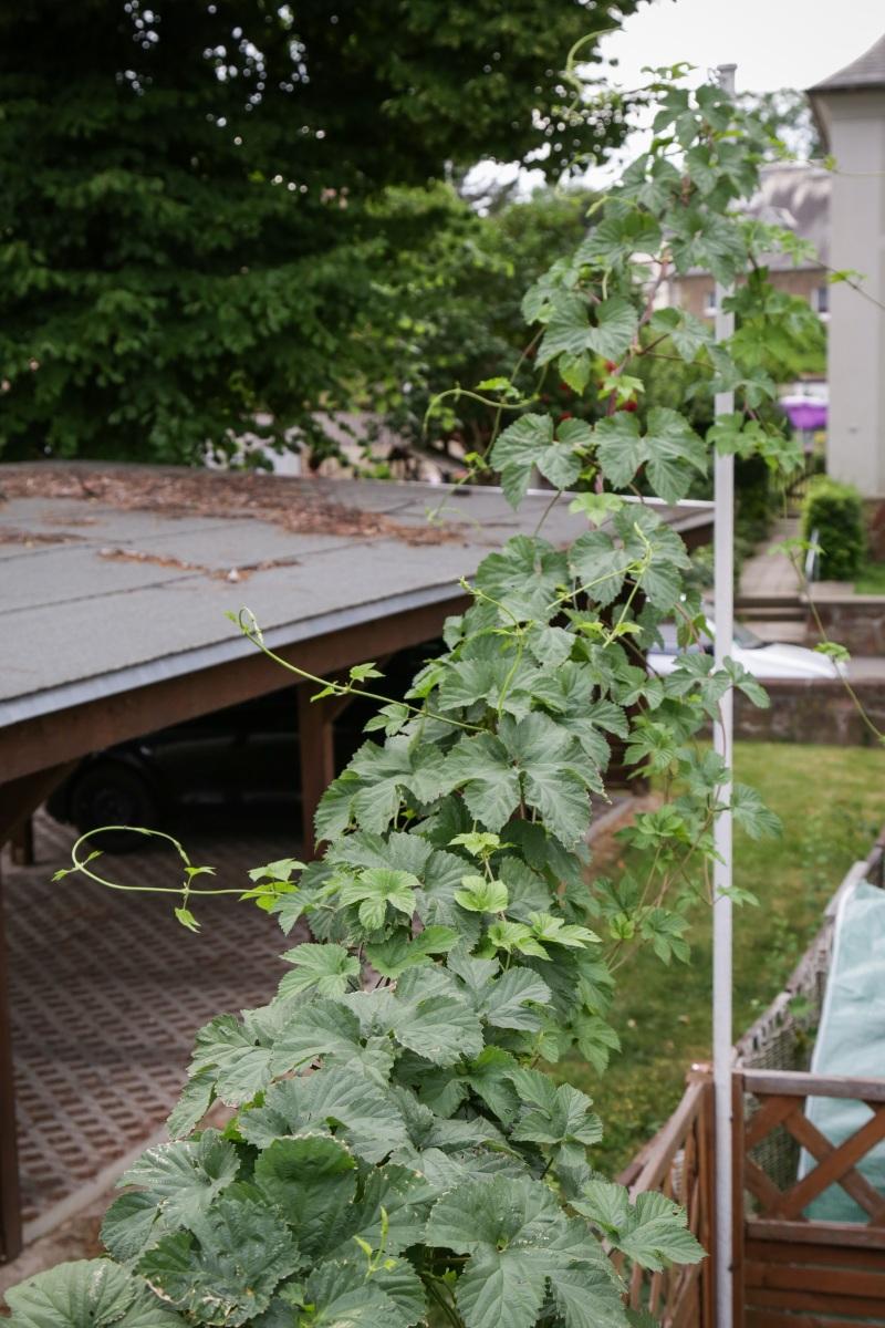 hallo von hier oben blick auf hochbeete garten majas pflanzenblog. Black Bedroom Furniture Sets. Home Design Ideas