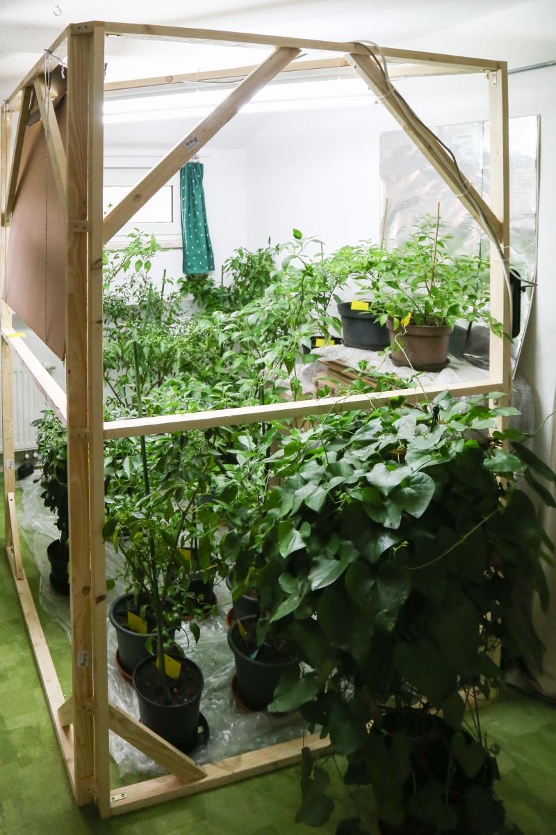 chilis berwintern mit kunstlicht winter 2017 2018 majas pflanzenblog. Black Bedroom Furniture Sets. Home Design Ideas
