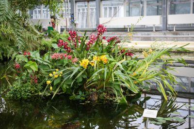 Orchideenschau BoGa Leipzig 2018
