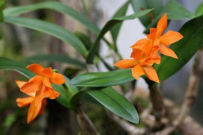 Lc. Tangerine Dream